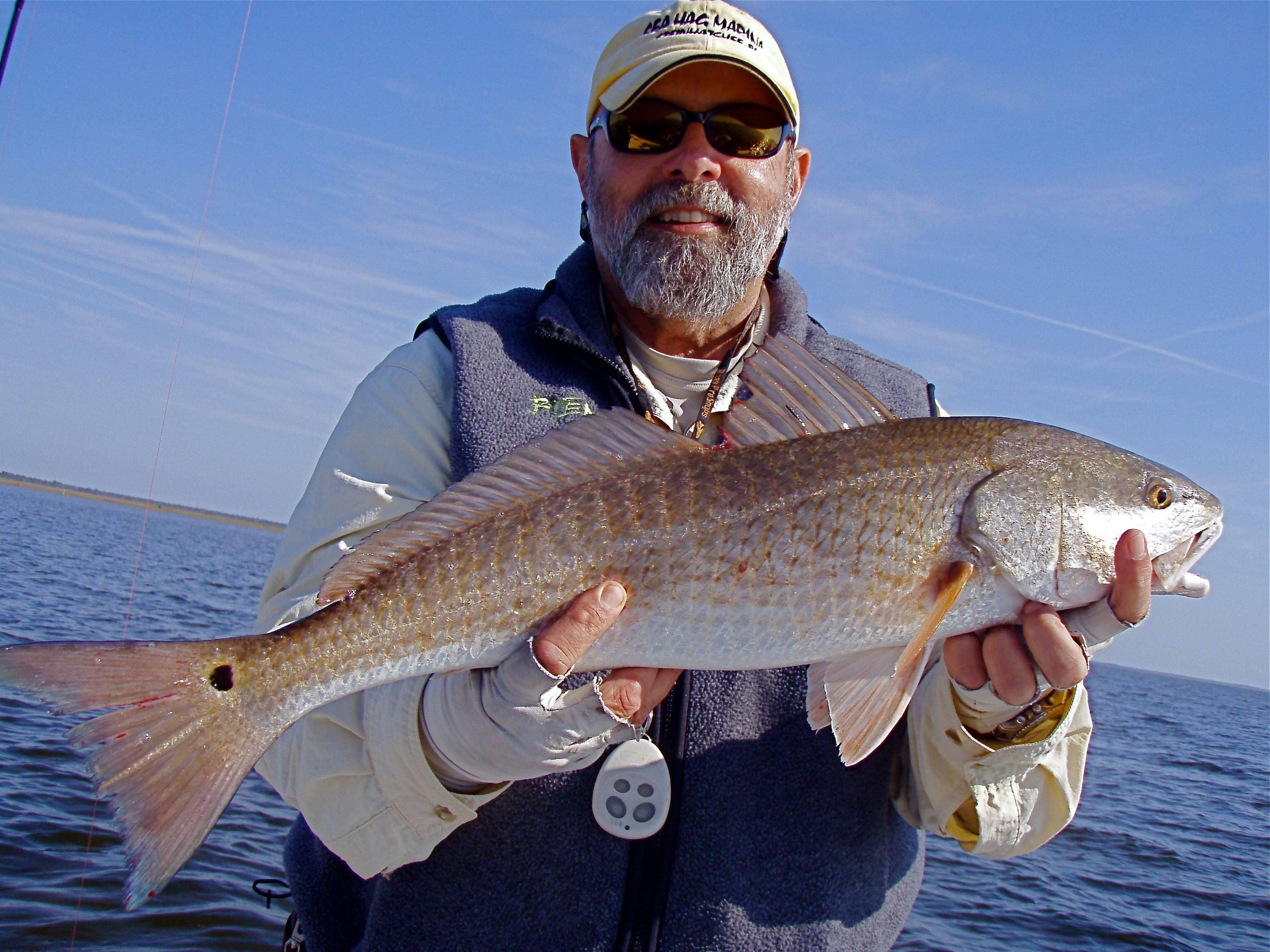 Redfish bite me fishing for Steinhatchee fl fishing